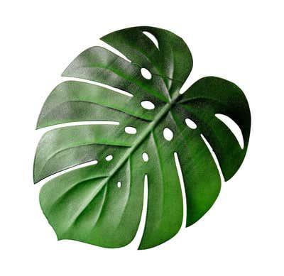 Deckchen in tropischer Blattform